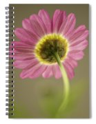 Delicate Daisy Spiral Notebook
