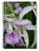 Delicate Orchid Blossoms Spiral Notebook