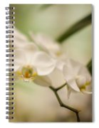 Delicate Romance Lace Spiral Notebook