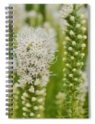 Delicate White Spiral Notebook
