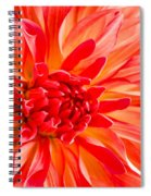 Delightful Dahlia Spiral Notebook