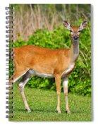 Delightful Doe Spiral Notebook