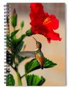 Delightful Hummer Spiral Notebook