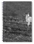 Denali's Majestic Wildlife Spiral Notebook