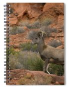 Desert Bighorn Sheep Spiral Notebook