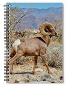 Desert Bighorn Sheep Ram At Borrego Spiral Notebook
