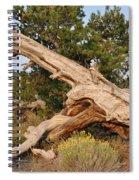 Desert Creation Spiral Notebook