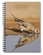 Desert Finch Carduelis Obsoleta Spiral Notebook