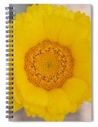 Desert Flower Spiral Notebook
