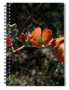 Desert Globemallow Spiral Notebook