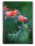 Desert Grace - Echeveria Spiral Notebook