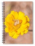 Desert-marigold Moth Spiral Notebook