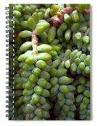 Desert Succulents 2 Spiral Notebook