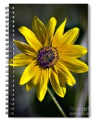 Desert Sunflower Spiral Notebook