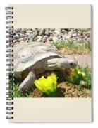 Desert Tortoise Delight Spiral Notebook