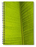 Detail Of Banana Leaf Andromeda Spiral Notebook