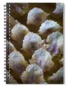 Details Spiral Notebook