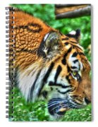 Determination In The Tigers Stare Spiral Notebook