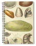 Devonian Fossils, Illustration Spiral Notebook
