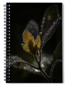 Dew Drops And Crystals Spiral Notebook
