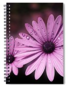 Dew Drops On Daisies Spiral Notebook