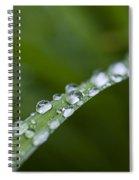 Dew Drops On Green Leaf Spiral Notebook