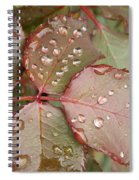 Dew Drops On The Rose Leaves Spiral Notebook