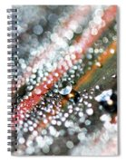Dewdrops On Durban Spiral Notebook