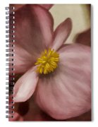 Dewy Pink Painted Begonia Spiral Notebook