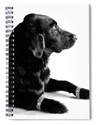 Diamonds Are A Dogs Best Friend Spiral Notebook
