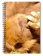 Digging For Gold Spiral Notebook