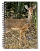 Dik-dik Spiral Notebook