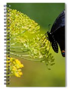 Dill And The Butterfly Spiral Notebook