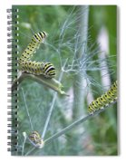 Dillweed And Caterpillars Spiral Notebook
