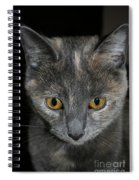 Dilute Tortishell Spiral Notebook