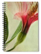 Dim Colours Spiral Notebook