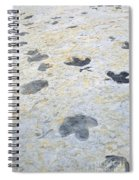 Dinosaur Tracks Spiral Notebook