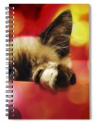 Disco Kitty 1 Spiral Notebook