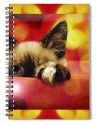 Disco Kitty 2 Spiral Notebook