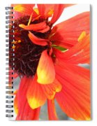 Disheveled 'devil May Care'  Spiral Notebook