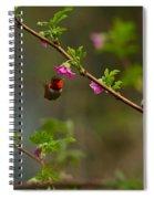 Distant Hummingbird Spiral Notebook