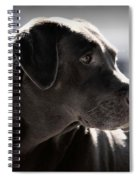 Distracted Dog Spiral Notebook