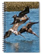 Diving Pelicans Spiral Notebook
