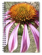 Divinity Gold - Echinacea Spiral Notebook