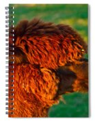 Do You Like My New Haircut Alpaca Spiral Notebook