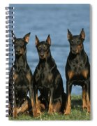 Doberman Pinschers Spiral Notebook