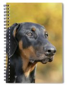 Dobermann Dog, In Autumn Spiral Notebook
