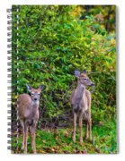 Doe A Deer Spiral Notebook
