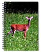 Doe A Deer Spiral Notebook