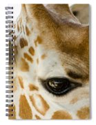 Doe Eyes Spiral Notebook
